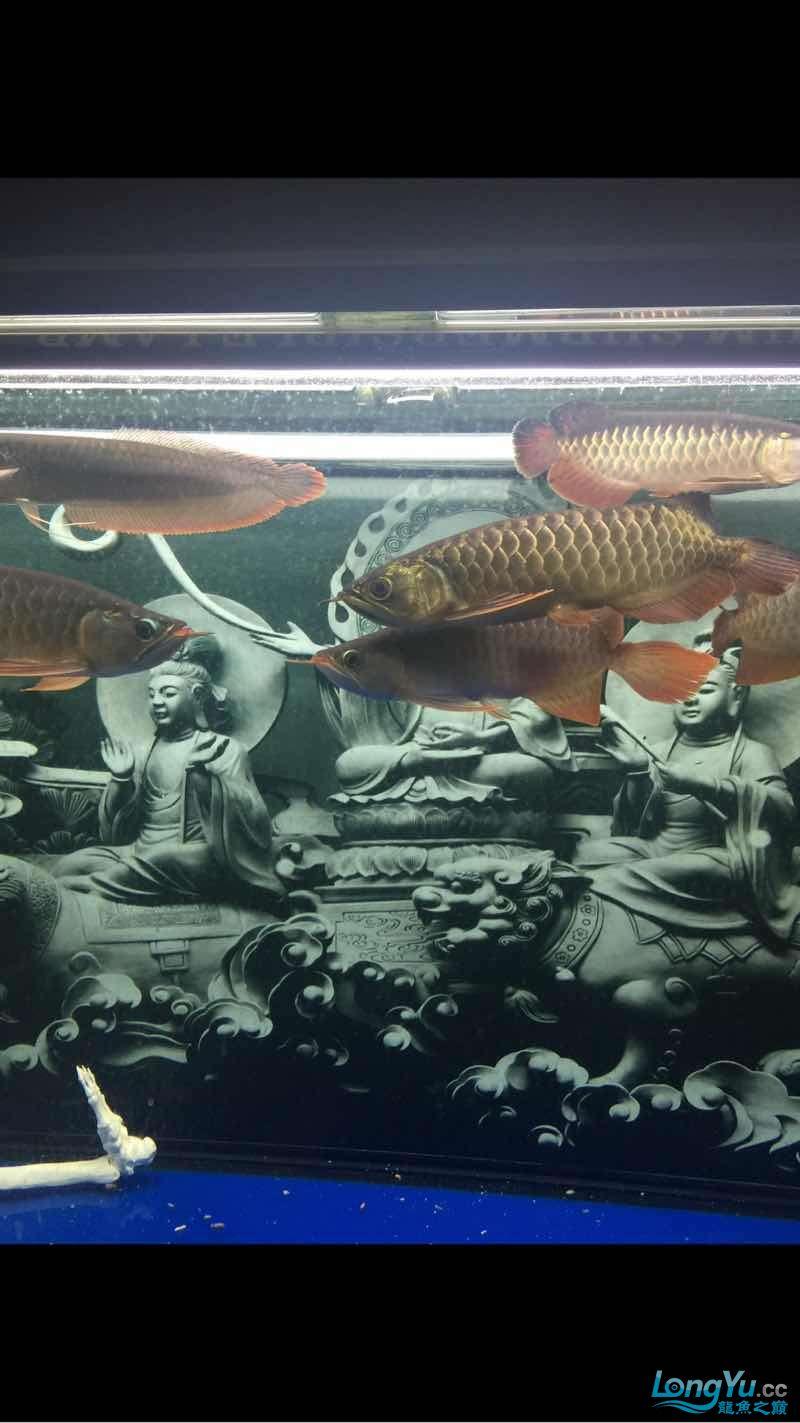 深夜给爱鱼拍几张 西安龙鱼论坛 西安博特第5张