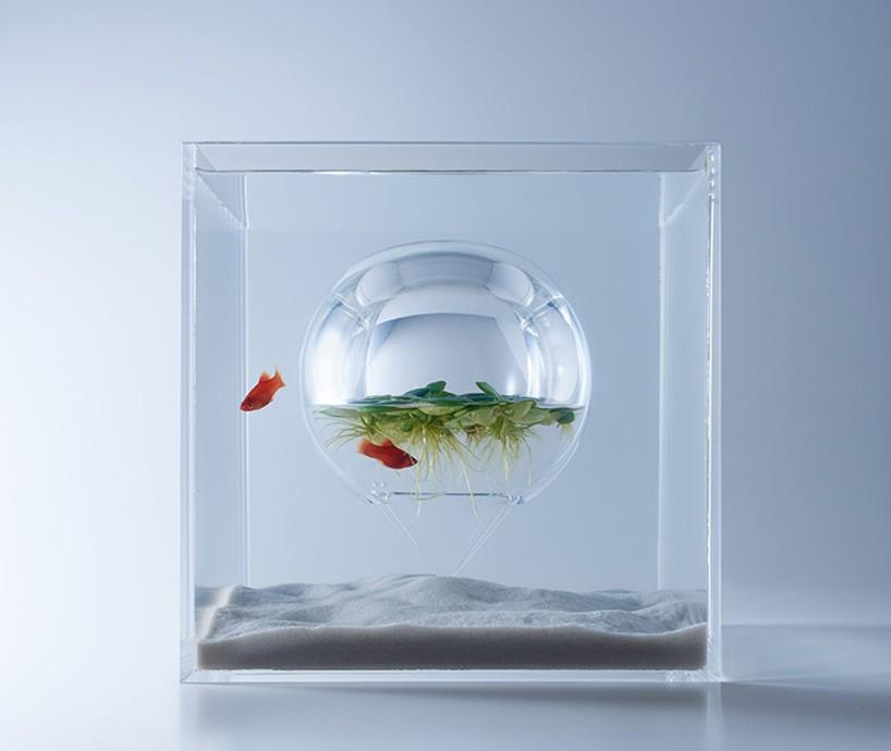 皇冠同好 西安观赏鱼信息