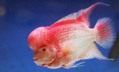 北京有几个花鸟鱼虫市场?都在哪?西安鱼缸水族批发市场