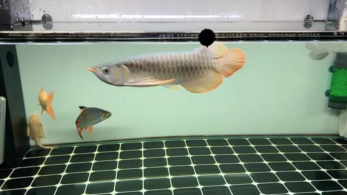 更新一下 西安观赏鱼信息 西安博特第1张