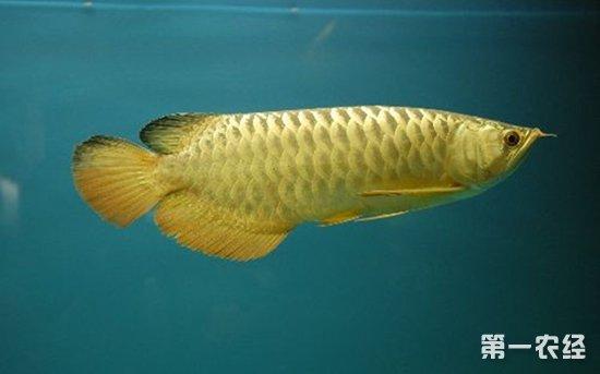 好久没更新鱼了两公分的苗感觉开始发力了