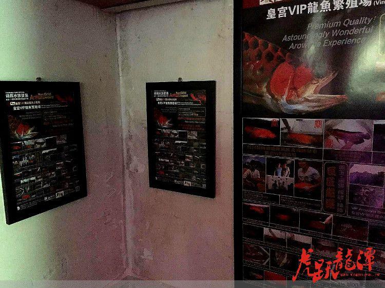8月27日 富县微社群 便民信息发布 西安龙鱼论坛 西安博特第2张
