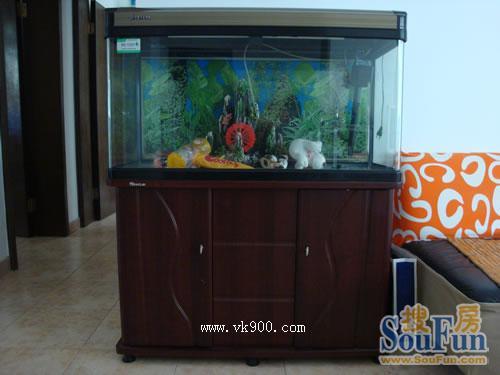 【西安鱼缸订作】【收藏】& 西安最全的批发市场攻略 西安龙鱼论坛 西安博特第7张