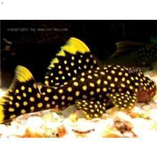 西安港务区有个4000平米大鱼缸 鱼缸里全是小孩 西安观赏鱼信息 西安博特第17张