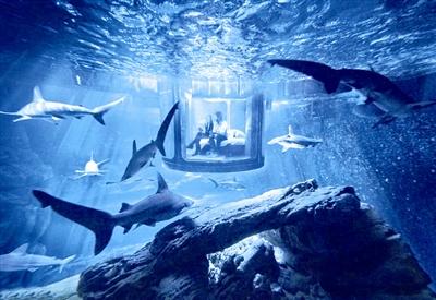 西安一水族市场售卖食人鱼 专家:虽不伤人但放生会破坏生态平衡 西安观赏鱼信息