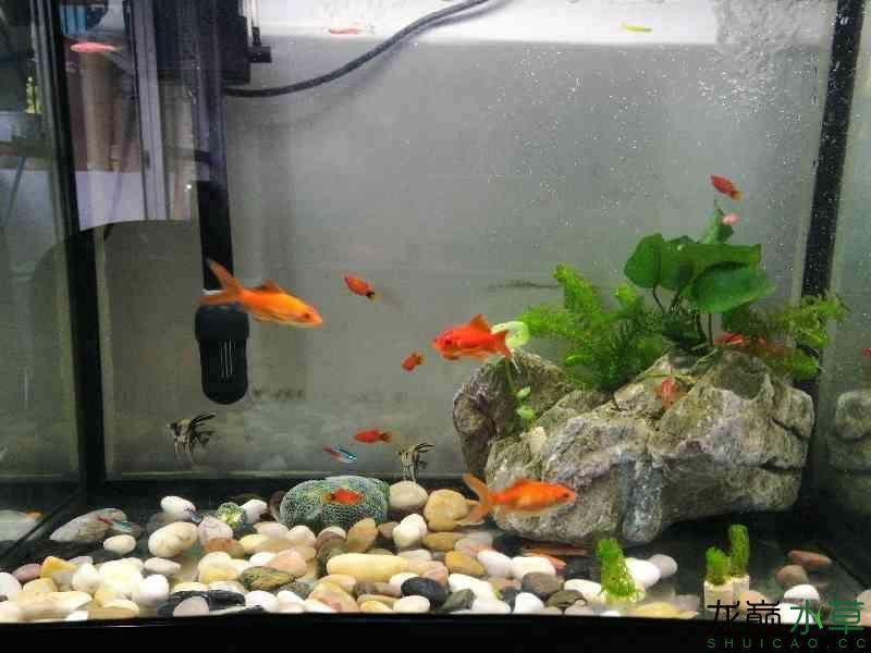 【西安水族花卉市场】神仙鱼被吃了吗? 西安龙鱼论坛 西安博特第2张