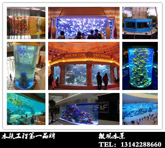 【西安小红龙价格】独吞 西安观赏鱼信息 西安博特第2张
