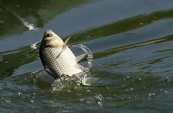 【西安鱼缸过滤】西安这些小市场有着大宝藏点亮生活烟火气 西安观赏鱼信息 西安博特第34张