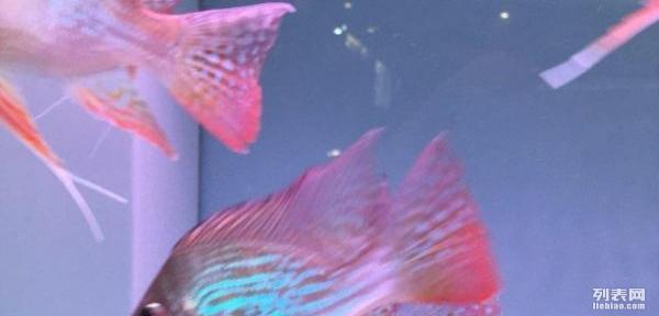 【西安黄金鼠鱼】求助:创星AX系列变频水泵如何? 西安龙鱼论坛