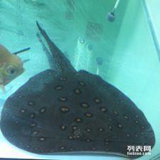 赏鱼养心 西安龙鱼论坛 西安博特第2张
