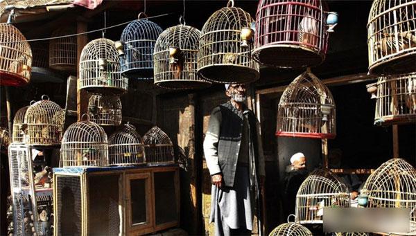 北京十里河花鸟鱼虫市场的龙感觉好贵的说