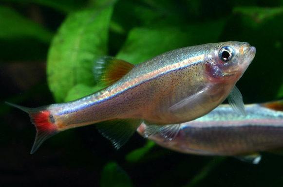 新手向各位大神请教 西安观赏鱼信息