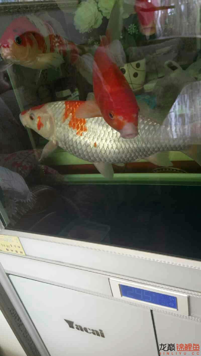 鱼便松散 西安观赏鱼信息 西安博特第1张