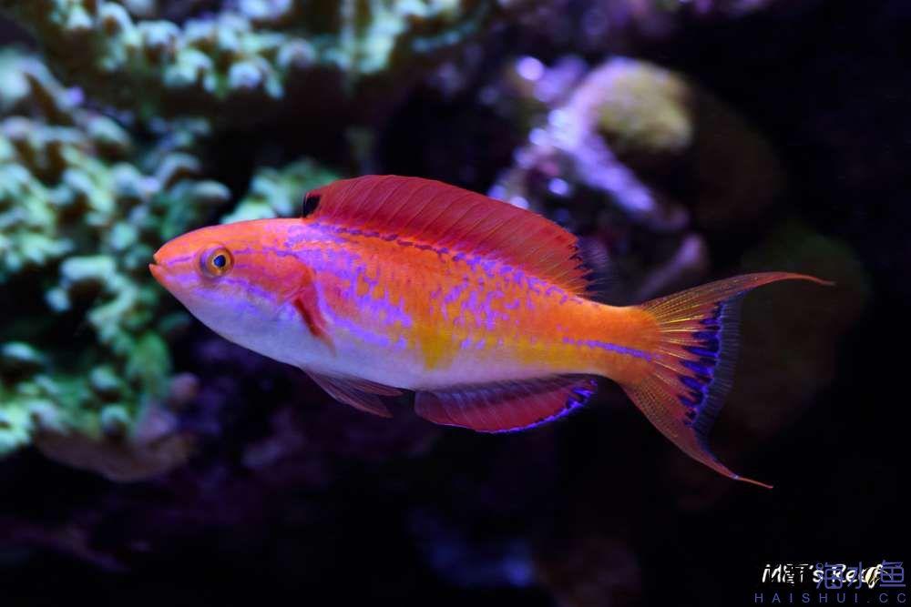 摄影美图剪影 西安观赏鱼信息 西安博特第1张