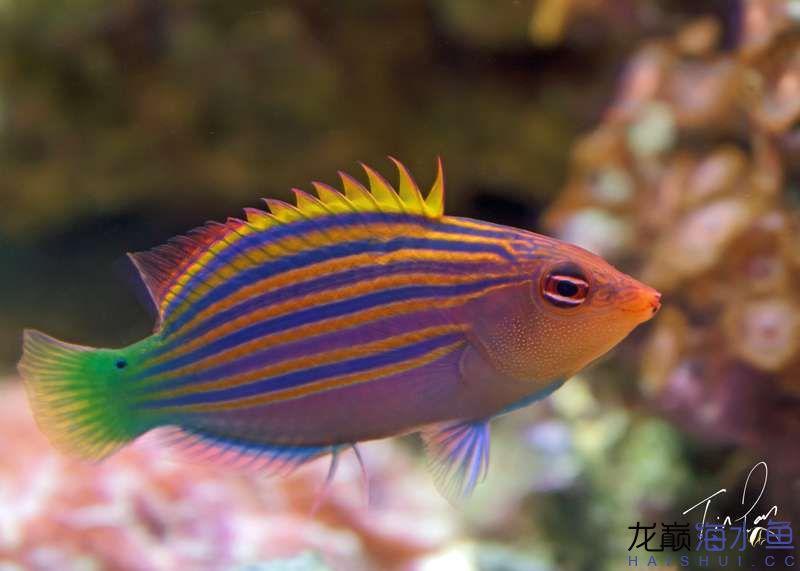 摄影美图剪影 西安观赏鱼信息 西安博特第2张