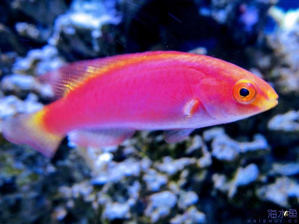 摄影美图剪影 西安观赏鱼信息 西安博特第3张