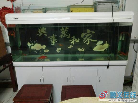 【西安汇丰观赏鱼】分享替代真正的红眼白孩子黑皇帝 西安观赏鱼信息