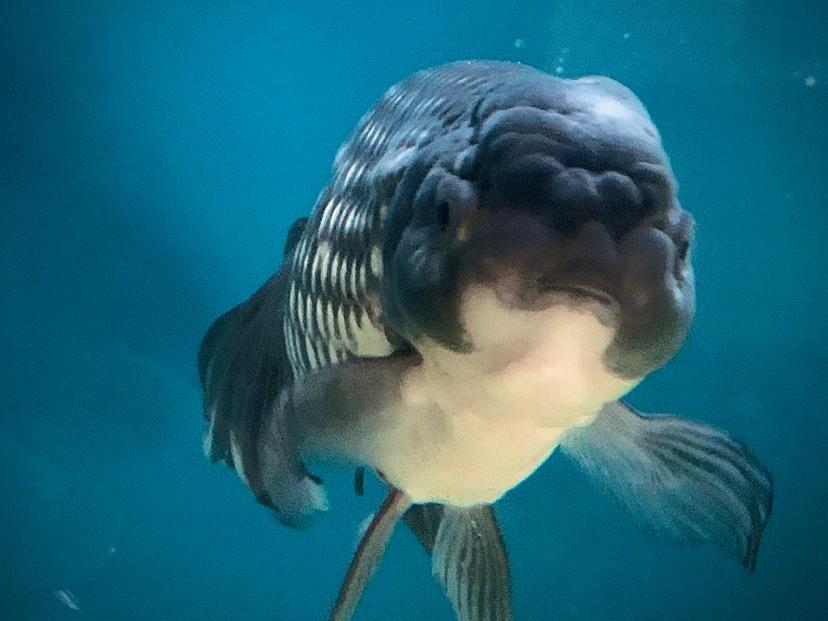 探索公园 西安观赏鱼信息 西安博特第1张