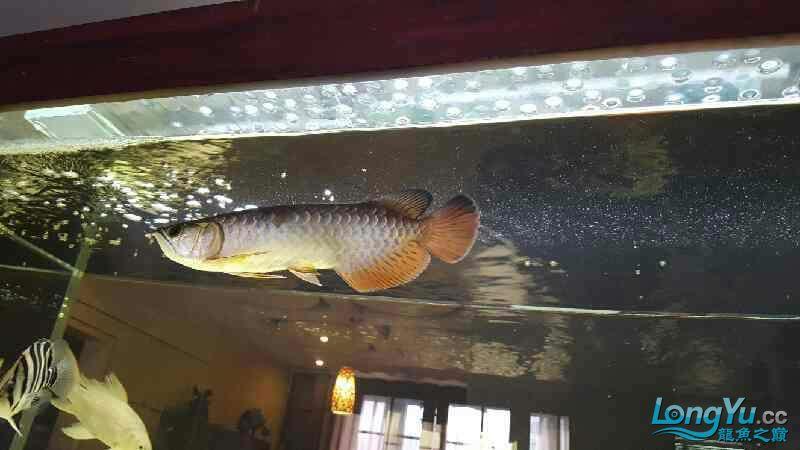 新的长发染发问题 西安观赏鱼信息 西安博特第1张