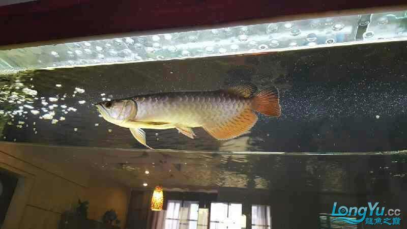 新的长发染发问题 西安观赏鱼信息 西安博特第2张
