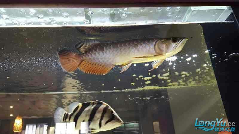 新的长发染发问题 西安观赏鱼信息 西安博特第3张