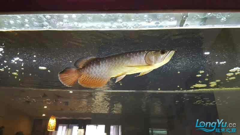 新的长发染发问题 西安观赏鱼信息 西安博特第4张