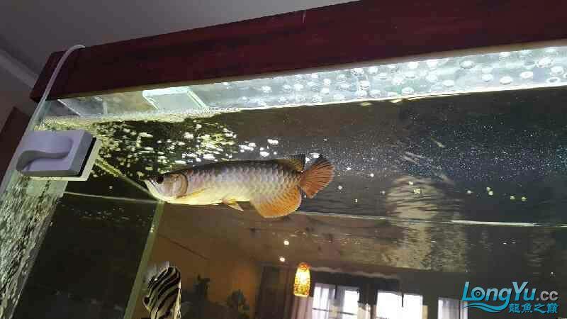 新的长发染发问题 西安观赏鱼信息 西安博特第5张