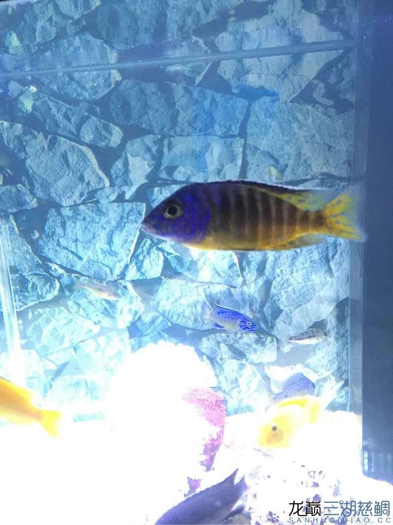 帮助看什么鱼 西安龙鱼论坛 西安博特第8张