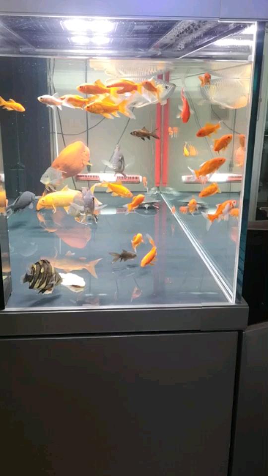 新年 西安观赏鱼信息 西安博特第1张
