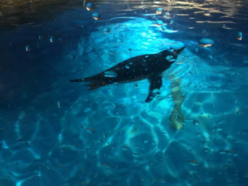 新年 西安观赏鱼信息 西安博特第2张