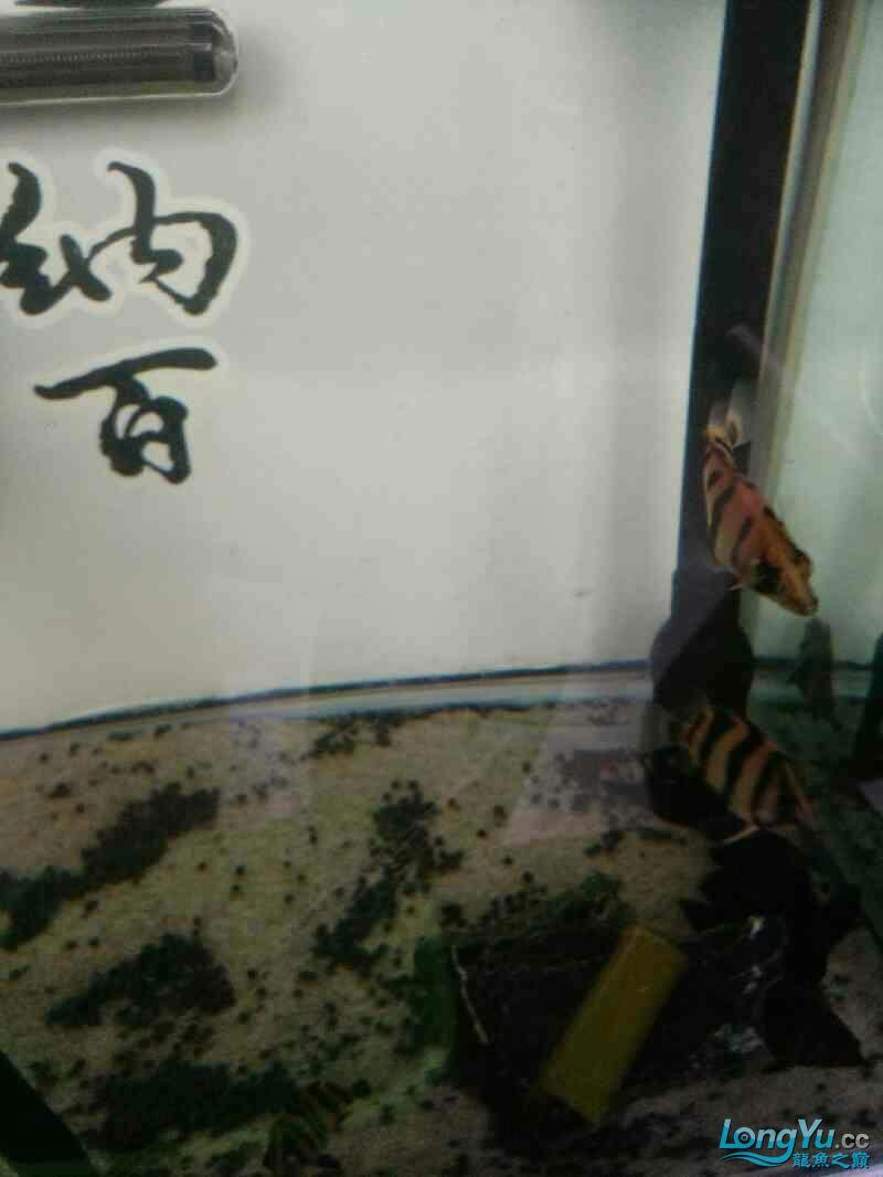 刚进入小明湖 西安观赏鱼信息 西安博特第1张