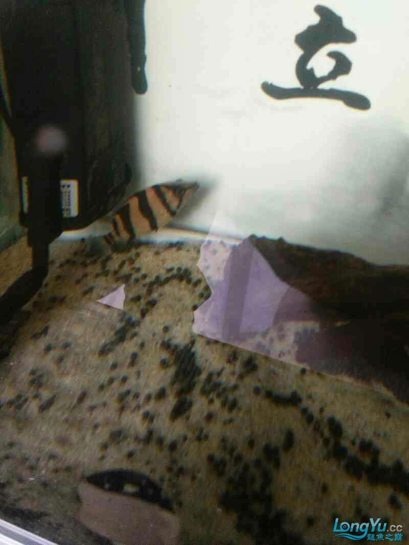 刚进入小明湖 西安观赏鱼信息 西安博特第3张