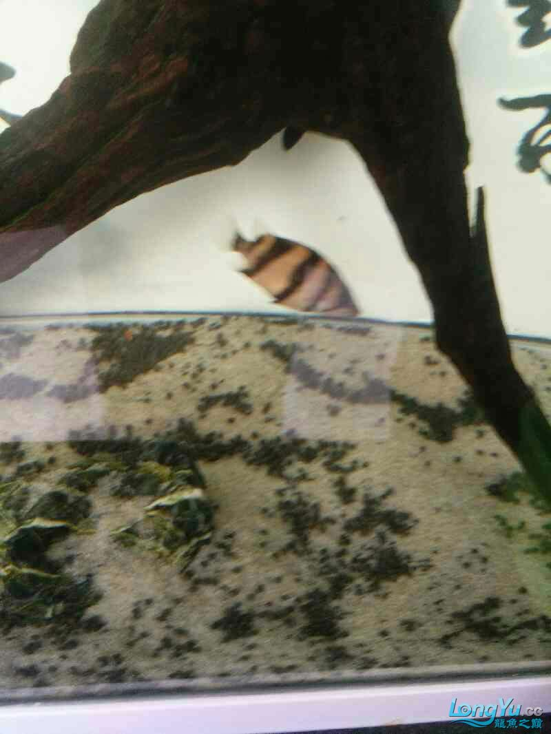 刚进入小明湖 西安观赏鱼信息 西安博特第4张
