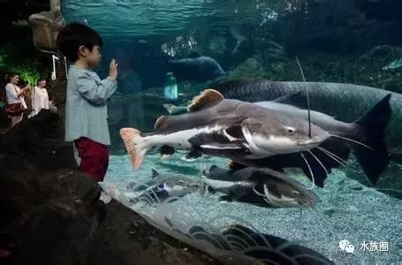 刚进入小明湖 西安观赏鱼信息 西安博特第6张