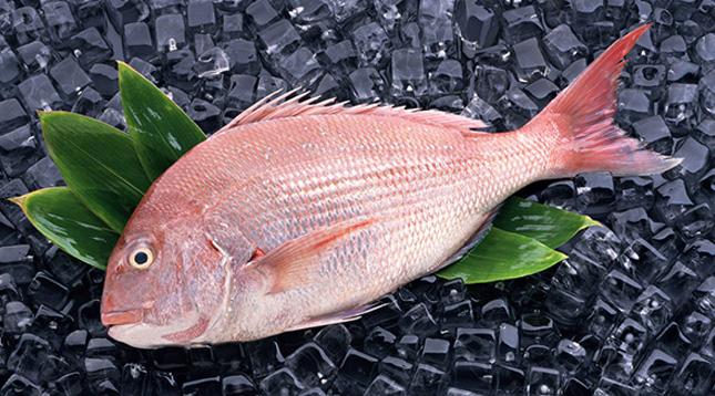 27厘米大白条寻求帮助 西安观赏鱼信息