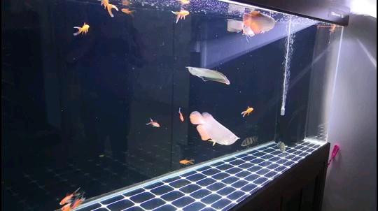 【西安鱼缸上门服务】新手进入维修站给一些建议 西安观赏鱼信息 西安博特第1张