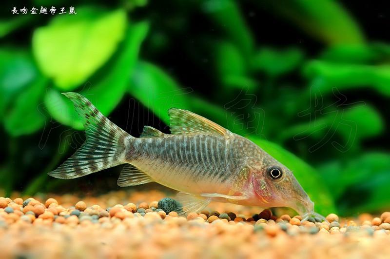 【西安观赏鱼市场】重新开启 西安观赏鱼信息