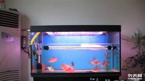 在网上购买观赏鱼有哪些注意事项? 西安龙鱼论坛