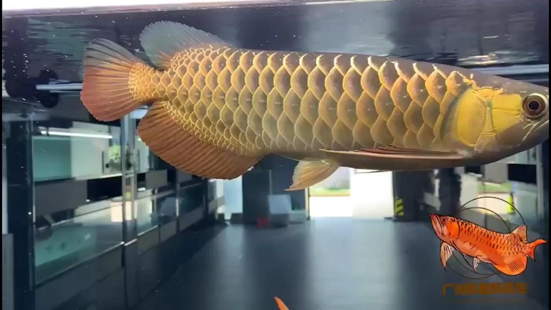 【西安最大的水族市场】原始生态古典品味