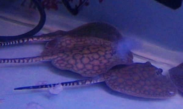【西安巴厘岛观赏鱼中心6】出售细流 西安龙鱼论坛 西安博特第2张