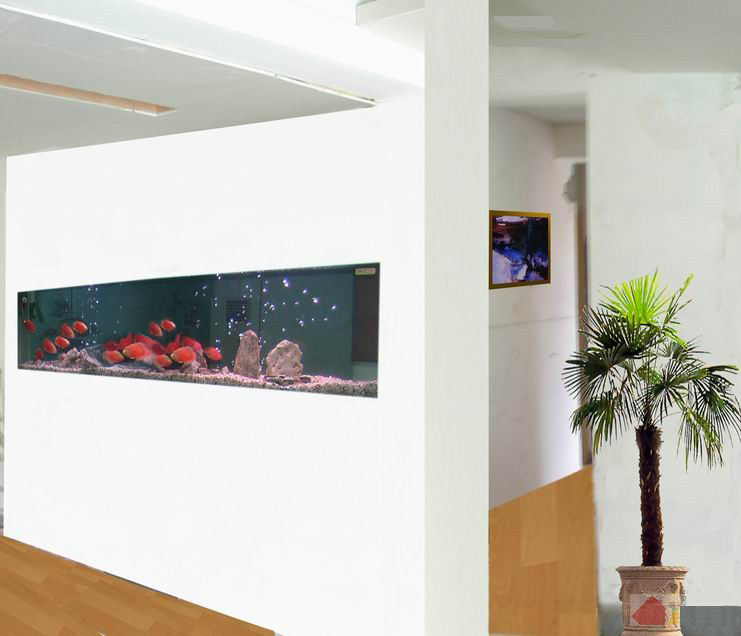 【西安水族馆地址】哇哈哈又摔倒了找个角画一个圆 西安龙鱼论坛 西安博特第3张