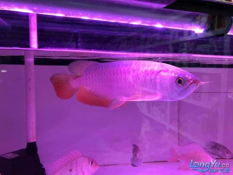 每个人都注视着 西安观赏鱼信息 西安博特第3张