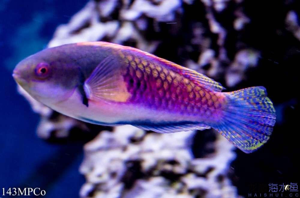 不要看我 西安观赏鱼信息 西安博特第1张