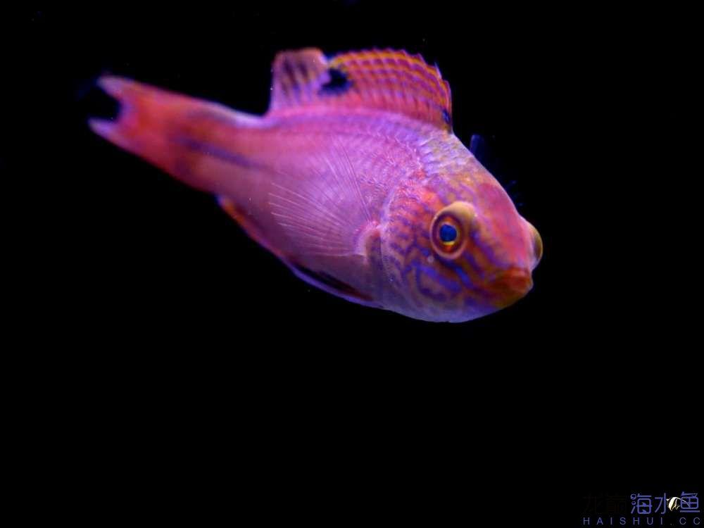 不要看我 西安观赏鱼信息 西安博特第2张