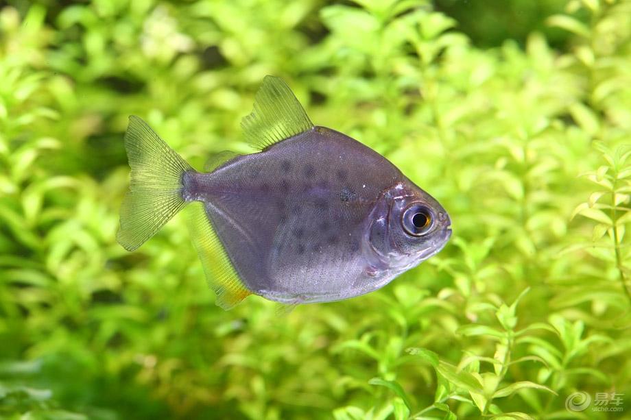 不要看我 西安观赏鱼信息 西安博特第3张