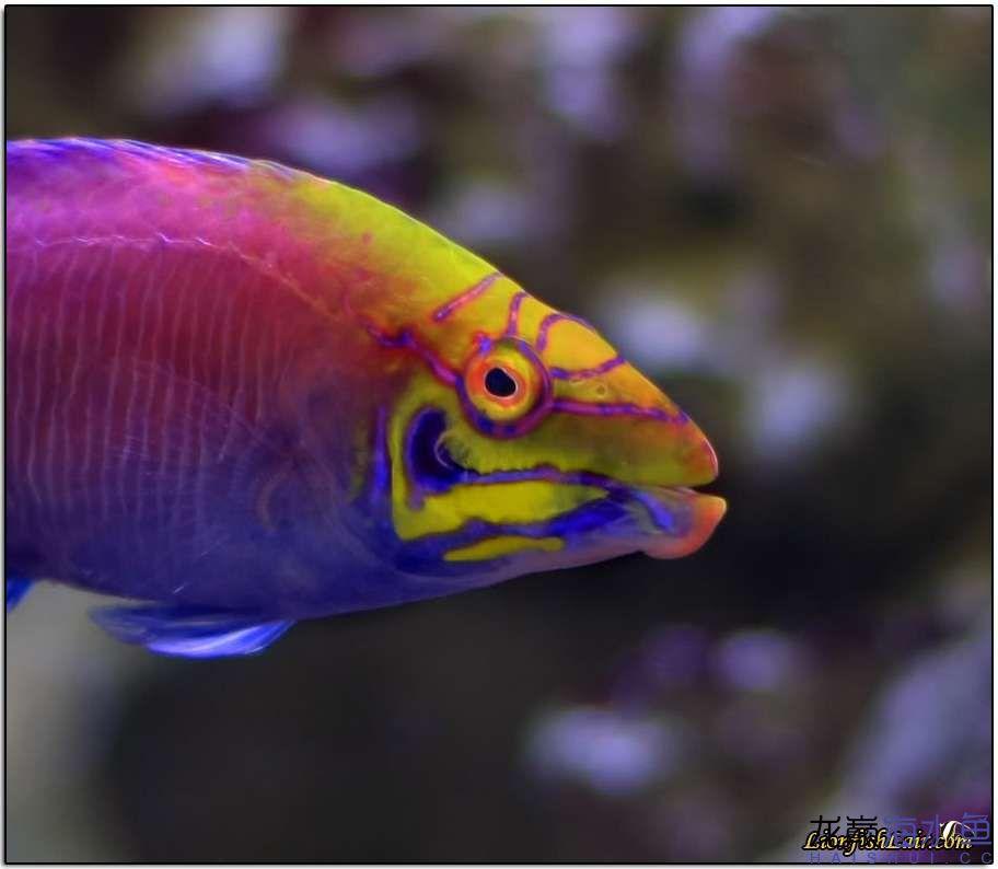 不要看我 西安观赏鱼信息 西安博特第4张