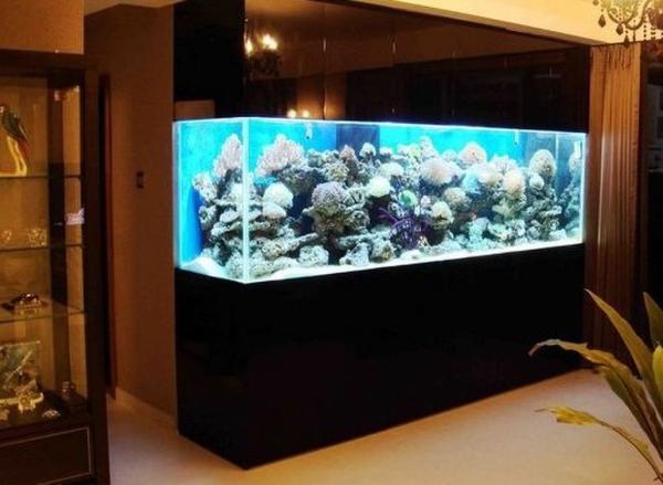 【西安祥龙鱼缸】关于印尼虎和泰虎的一点思考 西安观赏鱼信息