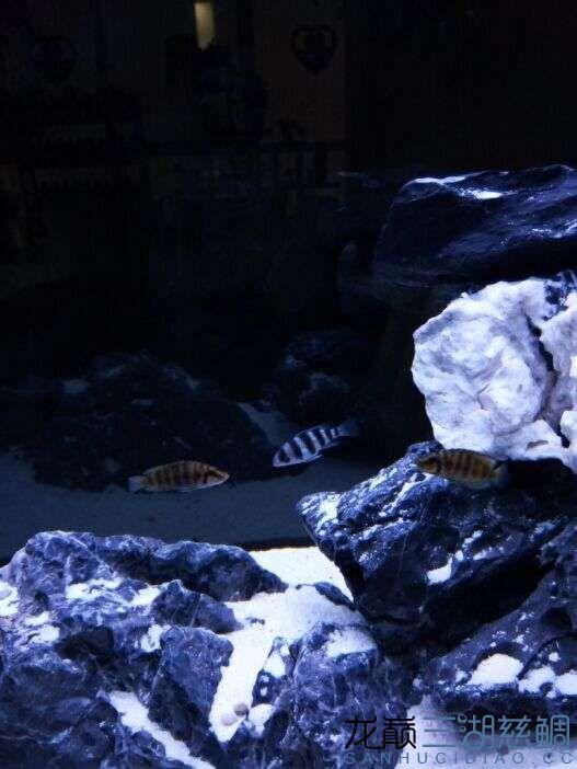 新手跳上湖屏风筒忘了大神给一些建议 西安观赏鱼信息 西安博特第4张