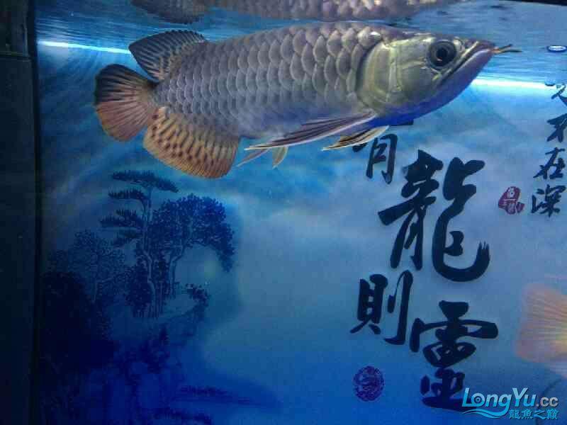 还剩两个月纪念 西安观赏鱼信息 西安博特第1张