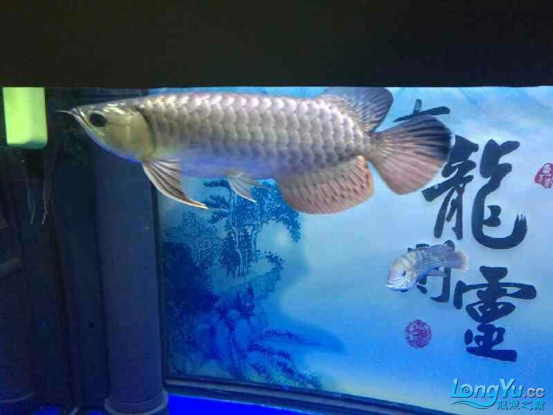 还剩两个月纪念 西安观赏鱼信息 西安博特第3张